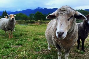 Trevena Glen Farm Animal Experience - Accommodation Nelson Bay