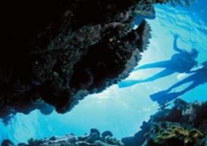 Deep Sea Divers Den - Accommodation Nelson Bay